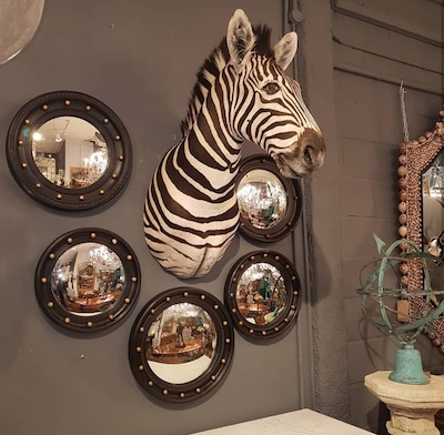 zebra taxidermy