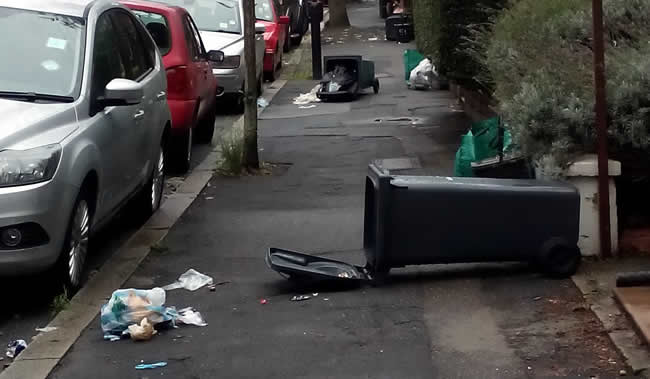 Foxes and Rubbish Collection In Dulwich